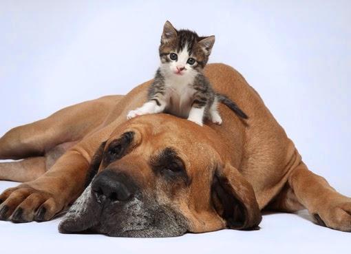 La boca de los Perros y Gatos