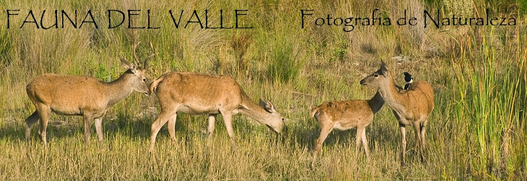 Fauna del Valle - Fotografía de Naturaleza