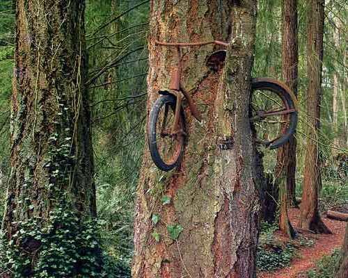 http://4.bp.blogspot.com/-iZCi24f5yIg/UH__e9dZY7I/AAAAAAAAAUo/XTSNDHGG7eg/s1600/bike-in-tree.jpg