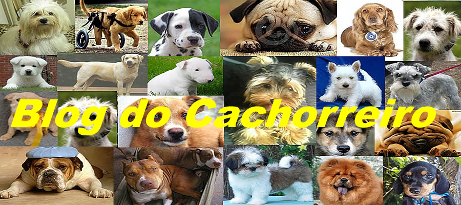 BLOG DO CACHORREIRO