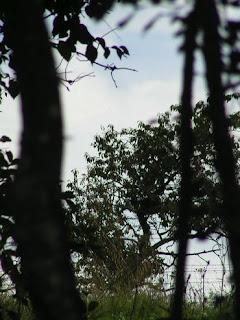 arbres dans la campagne