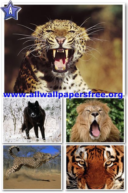 60 Amazing Animals Wallpapers 1280 X 1024 [Set 30]