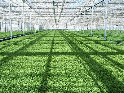 Trabajos De Geograf A Agricultura De Invernadero