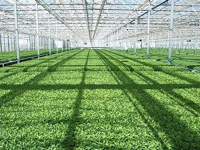 Trabajos de geograf a agricultura de invernadero for Vivero e invernadero
