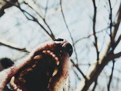 Que cuando toca ser perra, lo soy sin complejos.