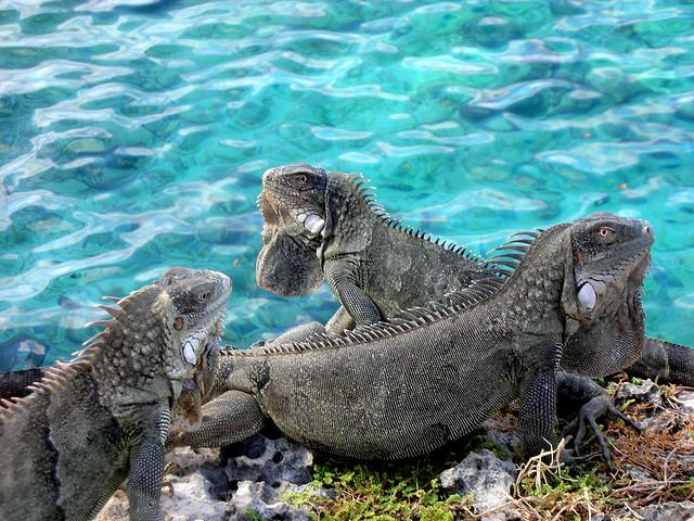 Bonaire Island PJ4HZ ... VEC, ARRL, JARL, Yaesu, Icom, AES, Amateur Electronic Supply, GigaParts, ...