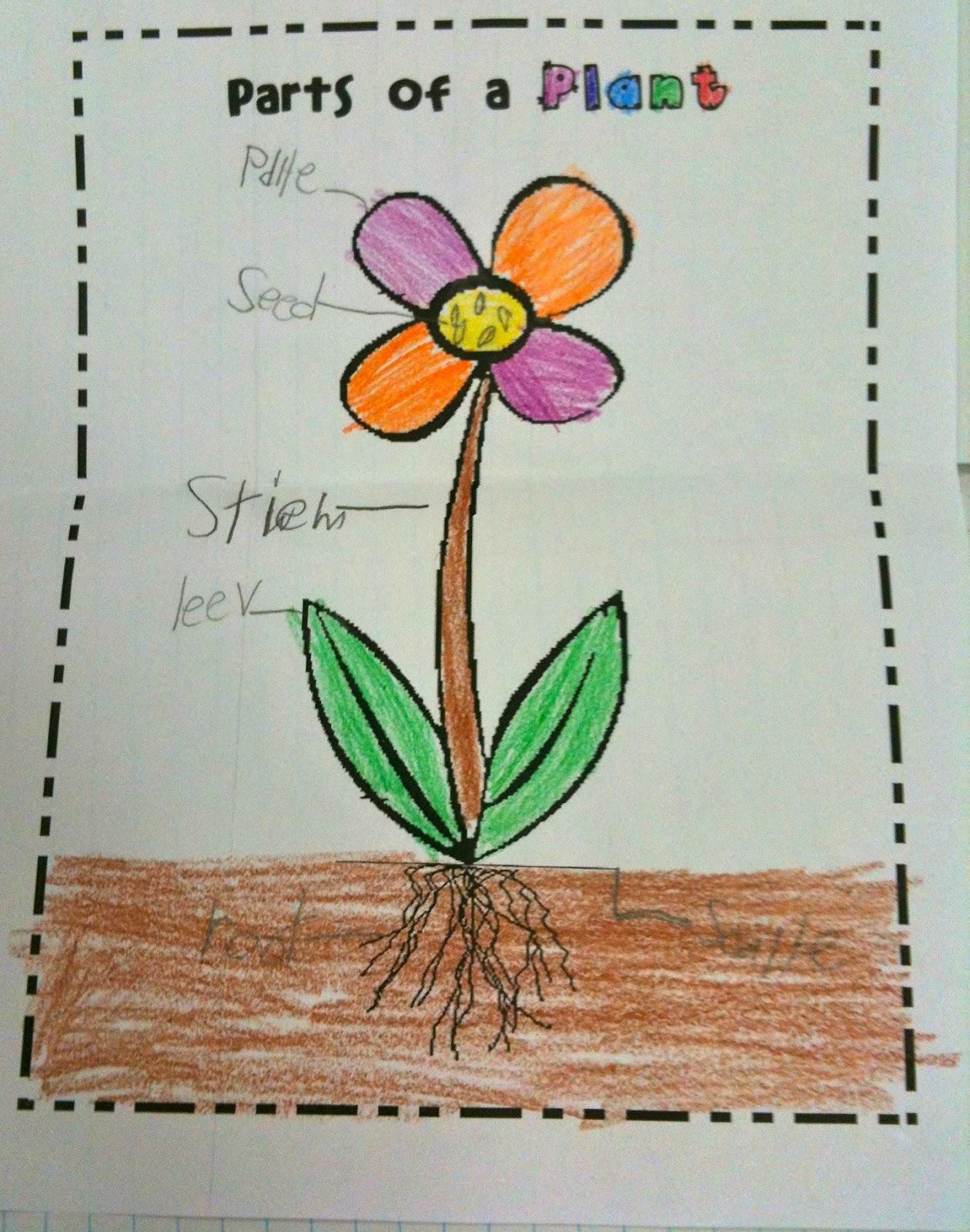 Kindergarten SuperKids Plants & freebies