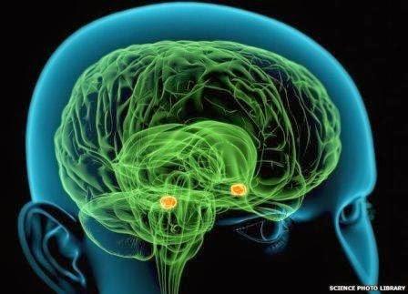 otak pelaku kejahatan