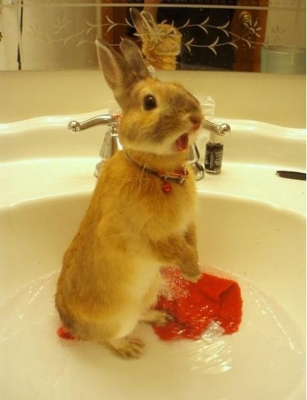 30 pictures of cute bunny, cute bunny pictures, cute bunny