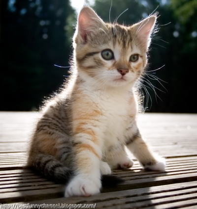 Cute kitty.