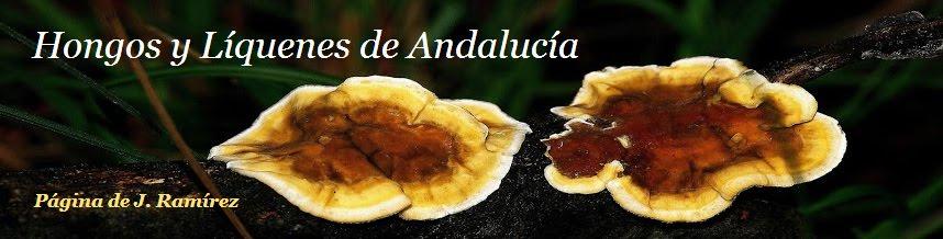 Hongos y Líquenes de Andalucía