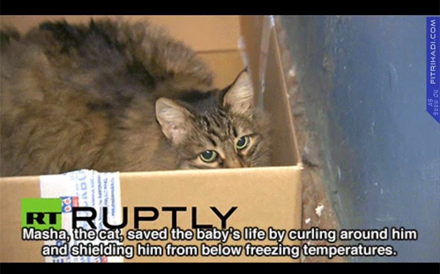 (Gambar) Kucing Selamatkan Bayi Lelaki Dari Mati Kesejukan