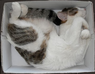 happy cat-in-the-box!