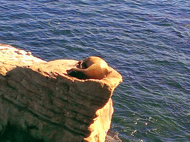 Sea Lions at La Jolla Beach sleeping