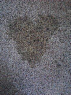 My Pee Pee Valentine