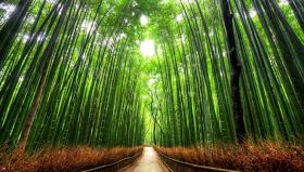Terowongan Pohon Bambu, Jepang
