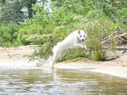 Leapin' Lexi