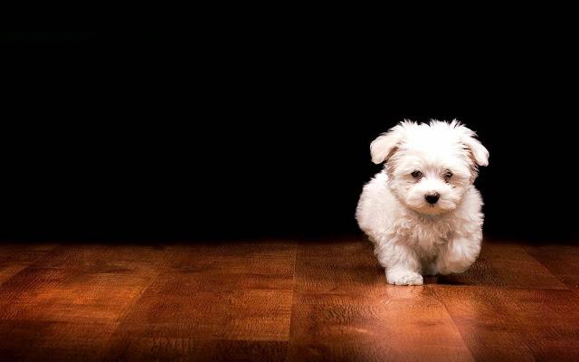 dog picture, dog image, dog photo hd, dog background, dog desktop pc wallpaper, dog high quality wallpaper