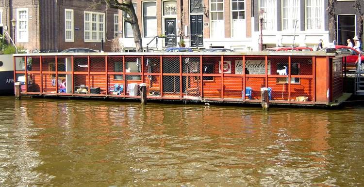 Kedi Botu Amsterdam
