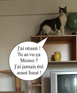 Un chat aveugle posé en hauteur.
