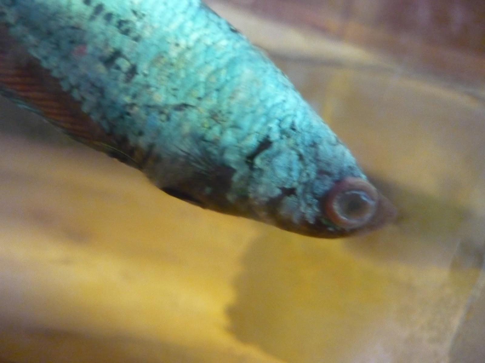 Quelques liens utiles for Traitement bassin poisson