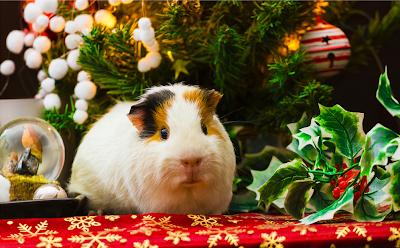 Mascotas navideñas en postales para compartir en Navidad