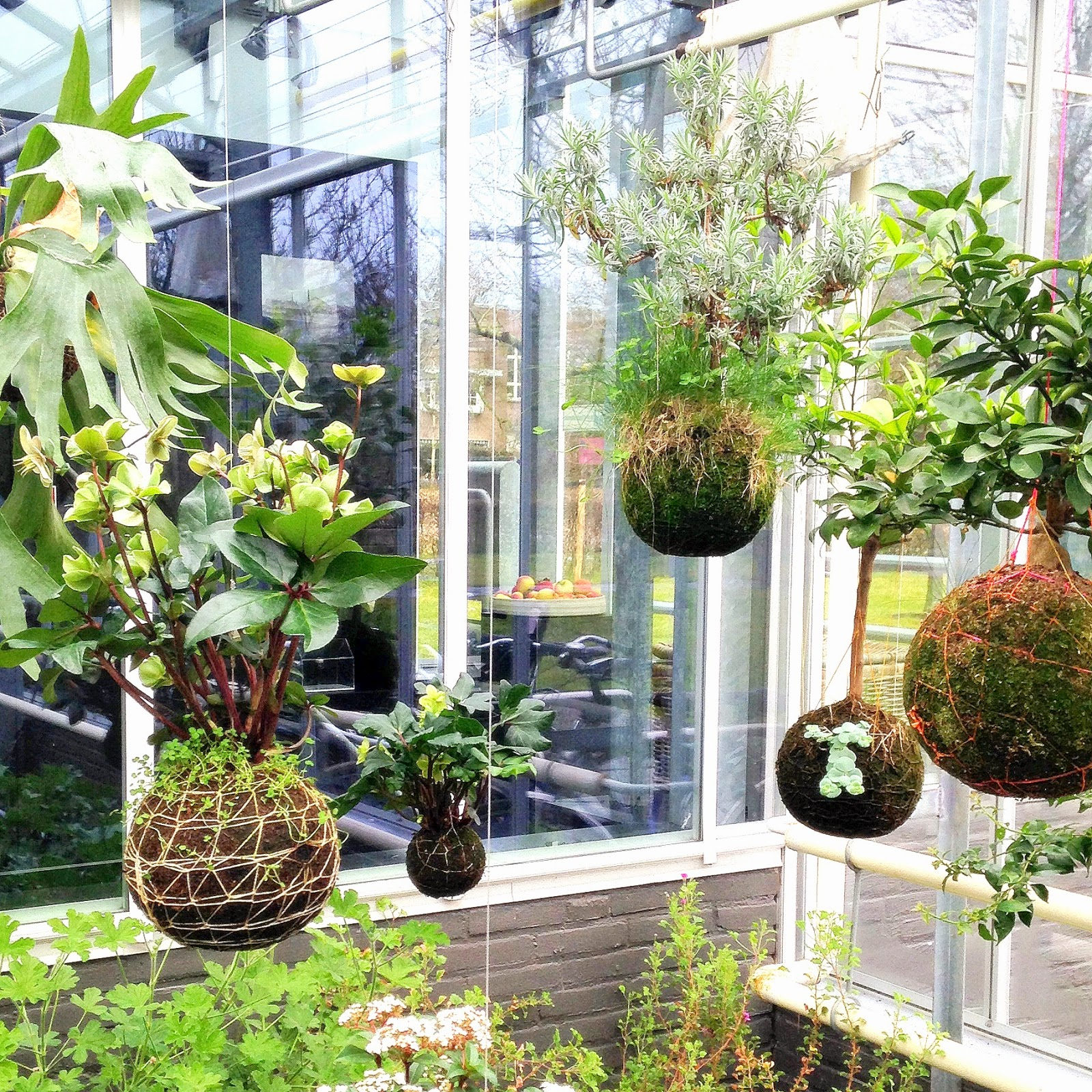 Soyz blog: urban jungle bloggers . hanging planters