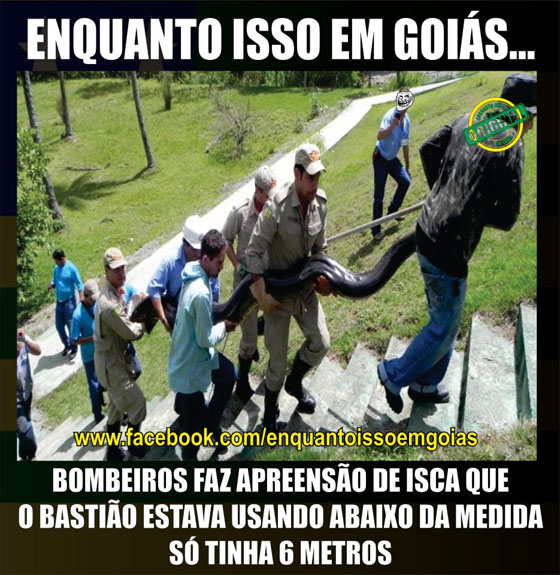 MOTIVACIONAIS: Enquanto isso em Goiás... - Apreensão cobra isca Bastião, 6 metros...