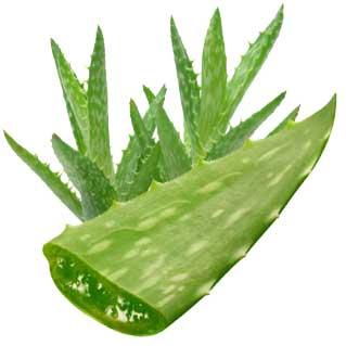 Aloe Vera Gel For Baby Sunburn
