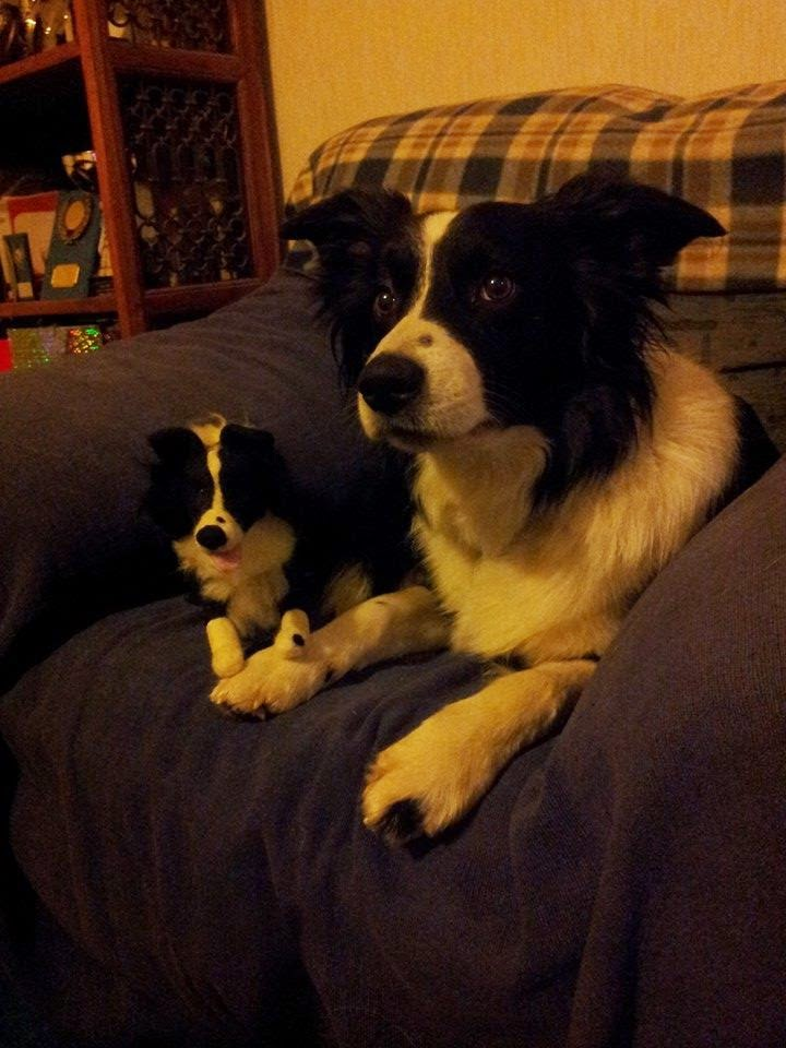 Needle felted dog, Border collie