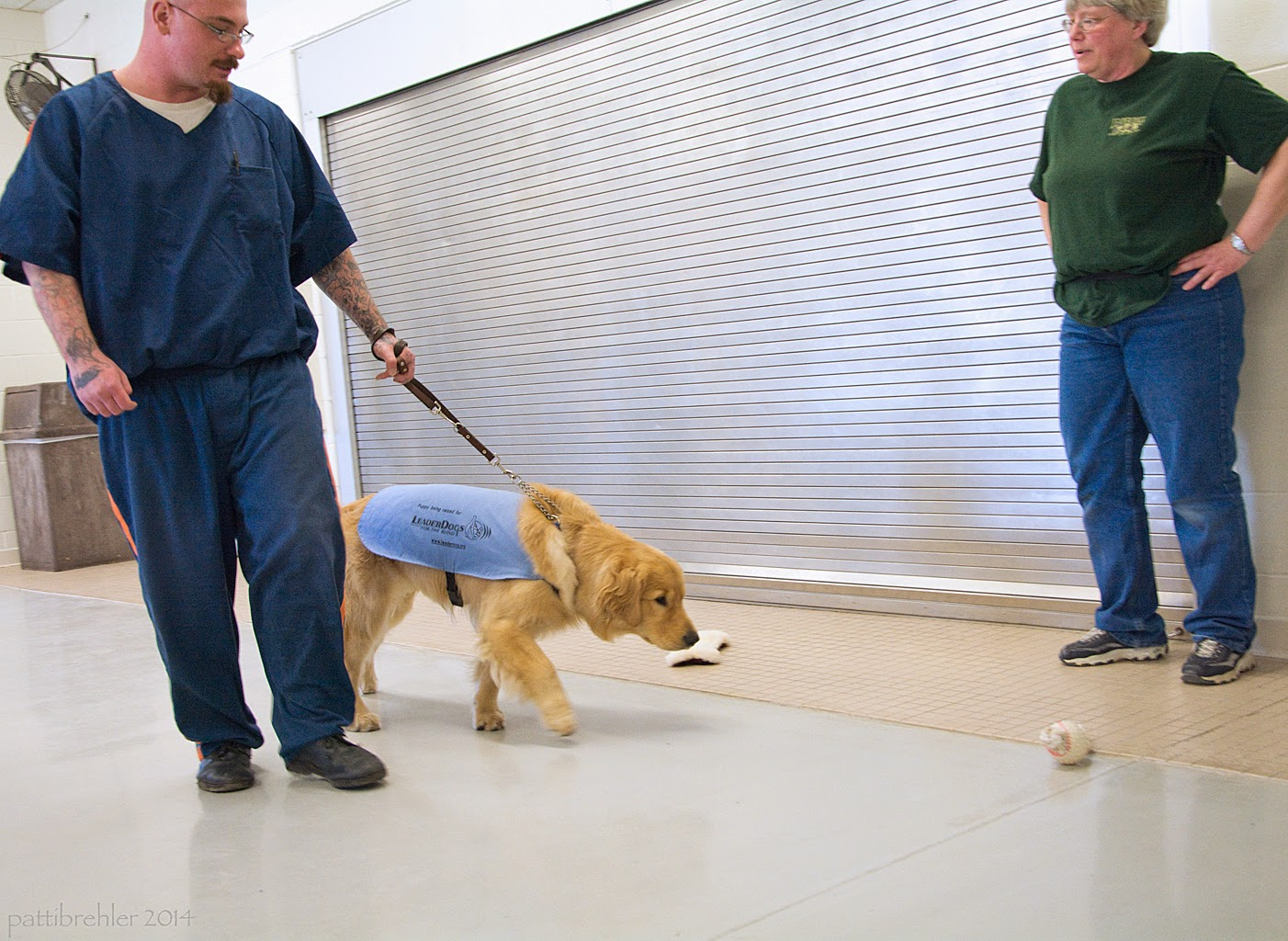 A man is walking from left to right, he is dressed in the blue prison uniform. He is holding a brown leather leash in he left hand. The leash is tight, attached to a golden retriever that is wearing the baby blue training jecket. The dog is on the man's left side, but is pullig toward some kind of round dog toy that is lying on the floor to the right. The woman dressed in a grean t-shirt and blue jeans is standing against a metal wall on the right, she has her hands on her hips and is instructing the man with the dog. There is a stuffed bone shaped toy on the other side of the dog on the floor.
