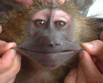 Gambar Monyet Lucu ~ MiZzu.net