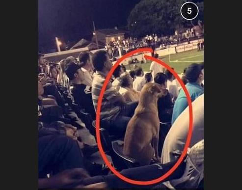 Durante a partida, um torcedor do Operário sentado nas sociais fotografou a cadela sentada em uma das mil cadeiras que o clube comprou do Atlético (Crédito: Reprodução)