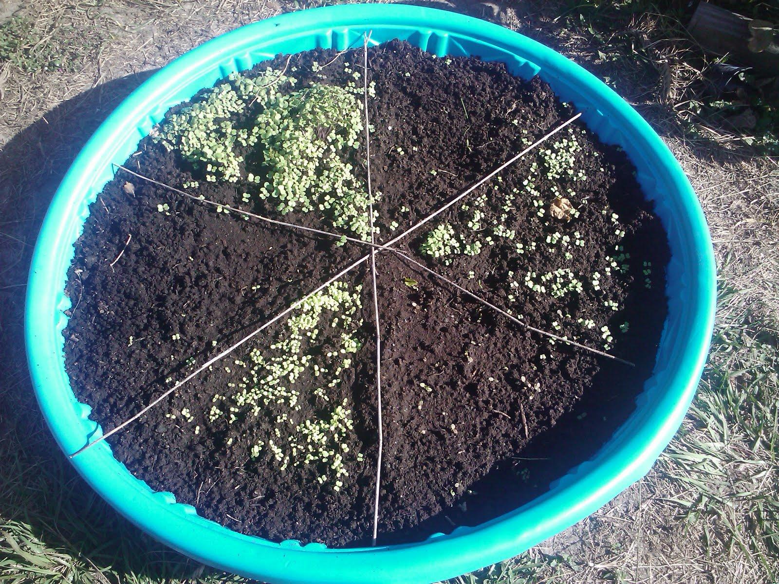 Kiddie Pool Salad Bat Garden.