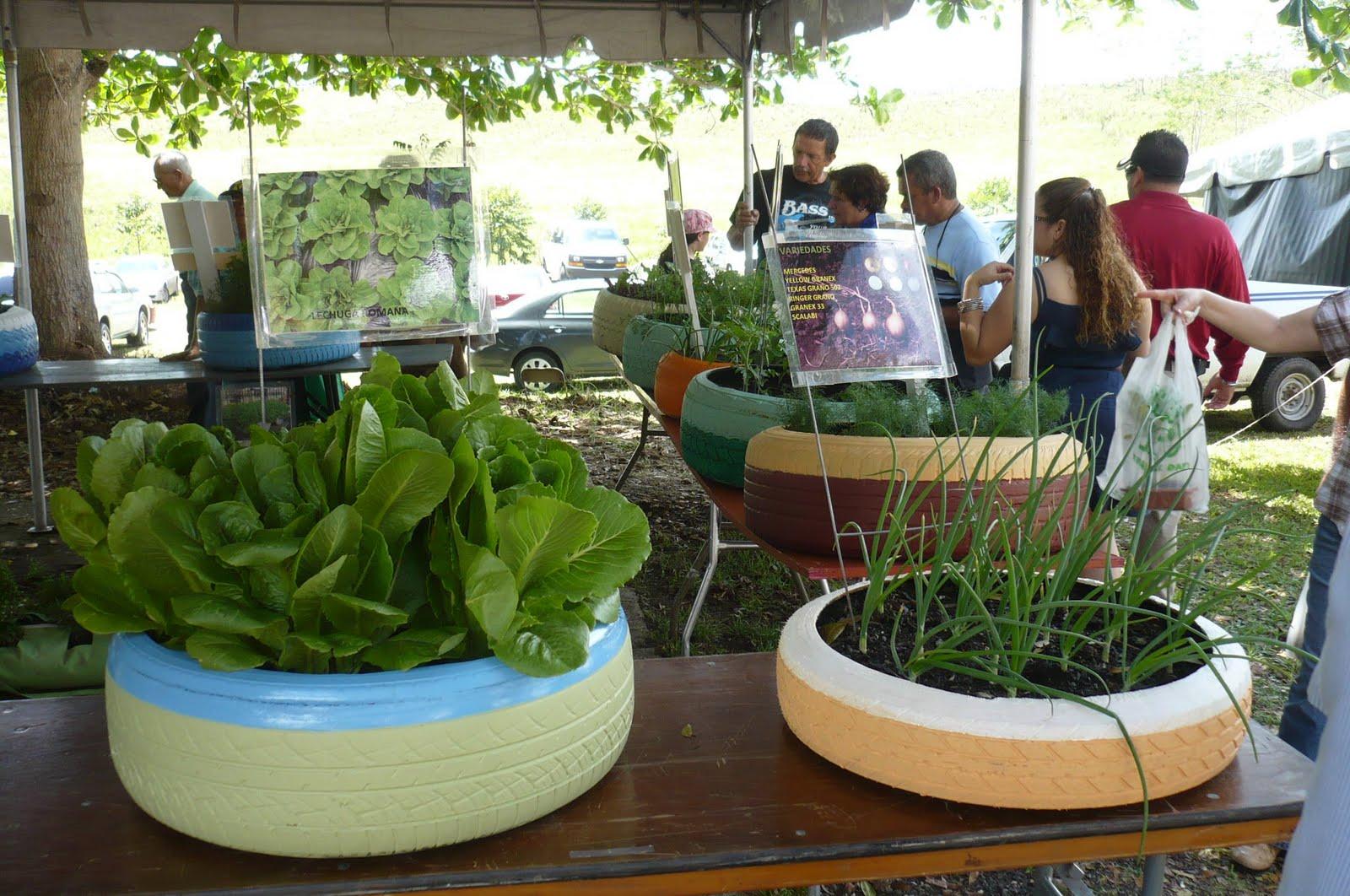 El huerto del colegio el pe ascal replanteando el huerto for Asociacion de plantas en el huerto