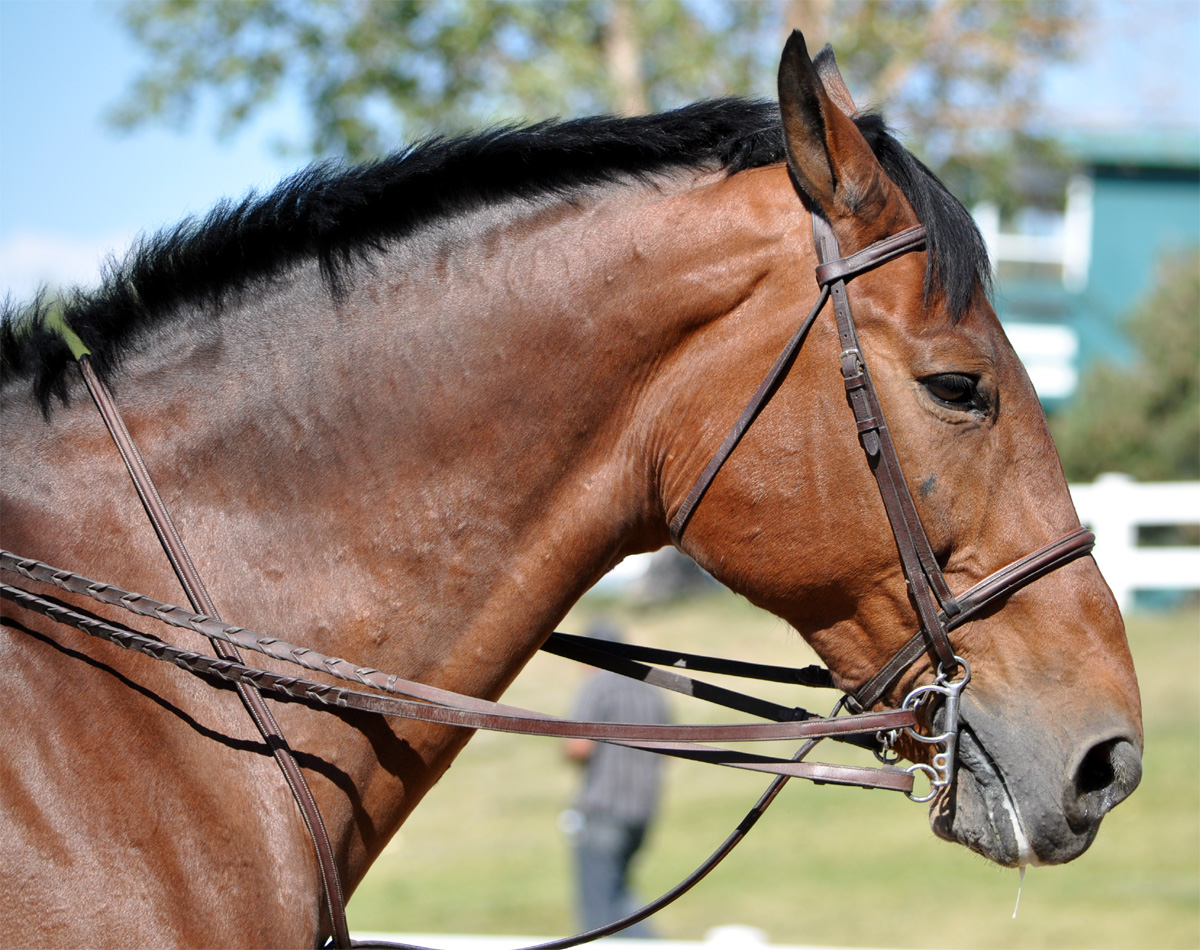 Custom Harness And Bridle Data Wiring 10pcsfr4coppercladcircuitboardsinglepcb70x100x15mmstable Braymere Saddlery Jumper Bridles Rh Blogspot Com Bit With Driving