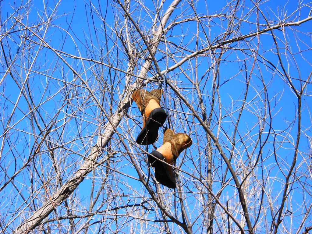 Tree Shoes Shoes in Trees And Spaetzle