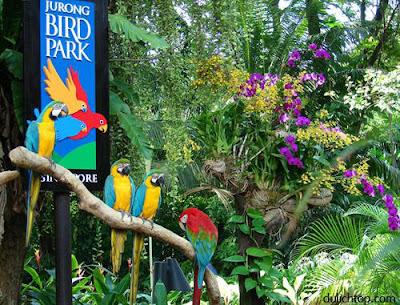 Tour Du Lịch Singapore: Sentosa-Vườn Chim Jurong Anh+dep+vuon+chim+jurong+singapore