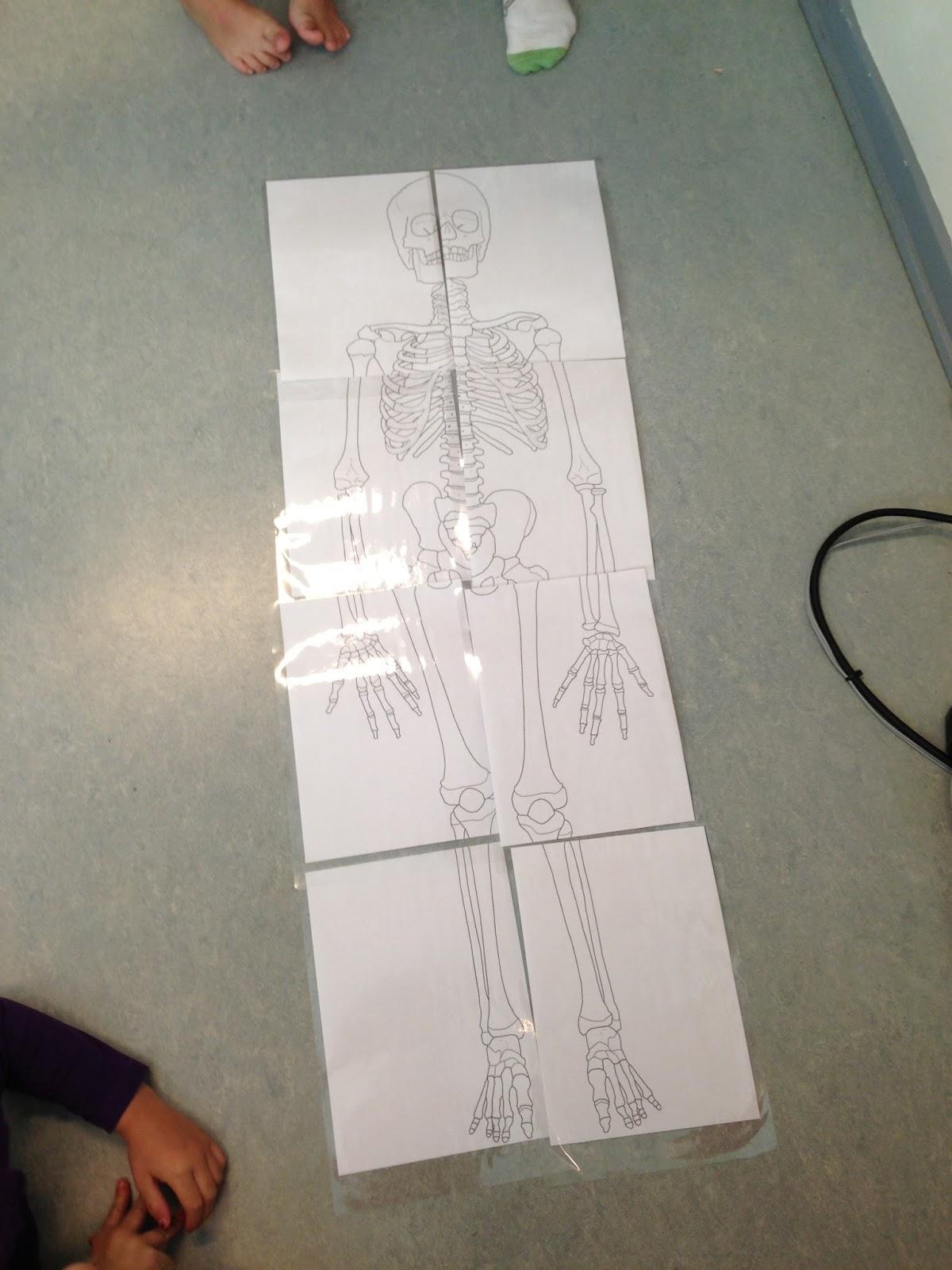 menneskets organer og tarme