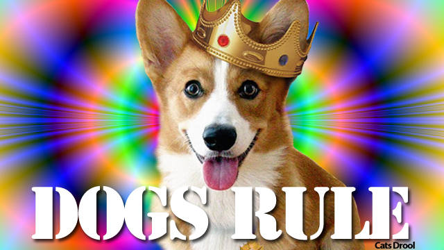 dogsrule.jpg