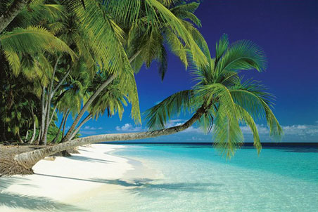 Tropical island suraflin blog - Free palm tree screensavers ...