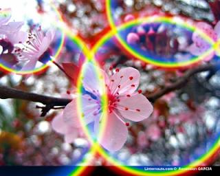 Jugando con los colores en Primavera