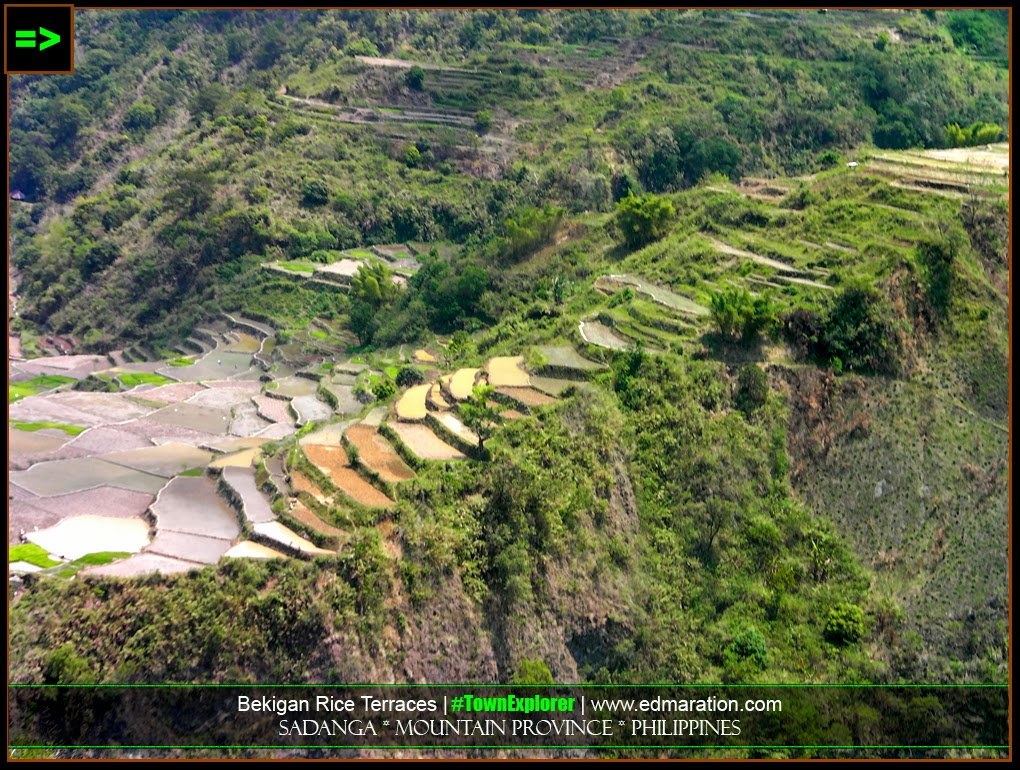 Rice Terraces, Sadanga, Mountain Province