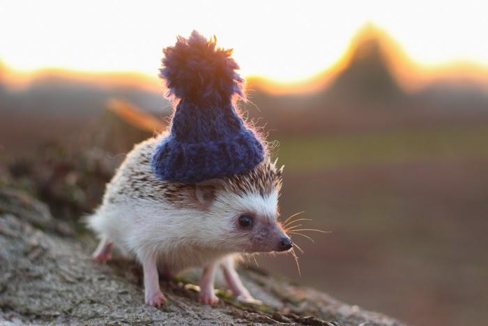 Pendleton the Hedgehog -- akhayley.blogspot.com
