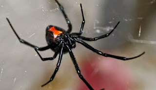 Serangga mematikan dan berbahaya