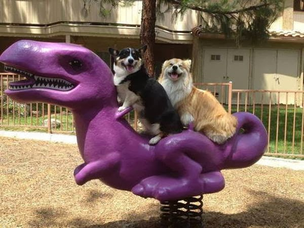 Cute dogs - part 6 (50 pics), two dogs ride dinosaur