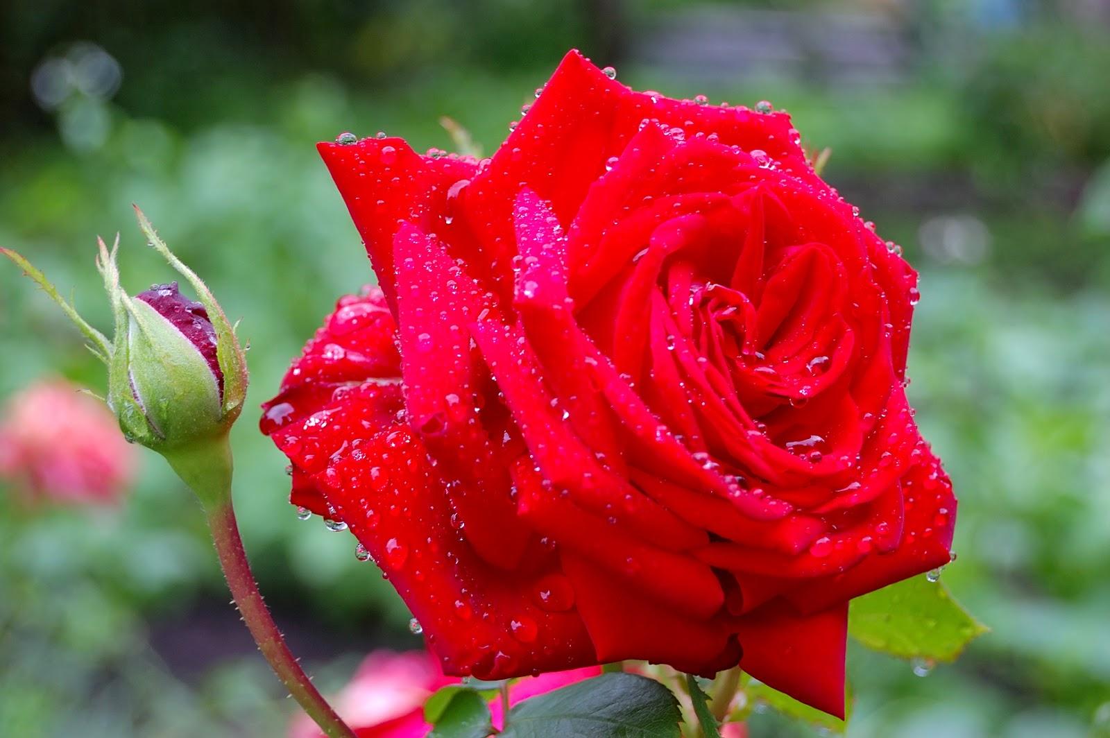 Imagenes de arreglos florales para enamorados grandes for Decorar fotos