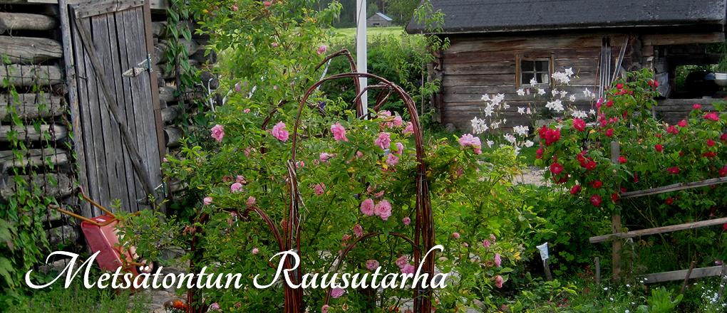 Metsätontun Ruusutarha