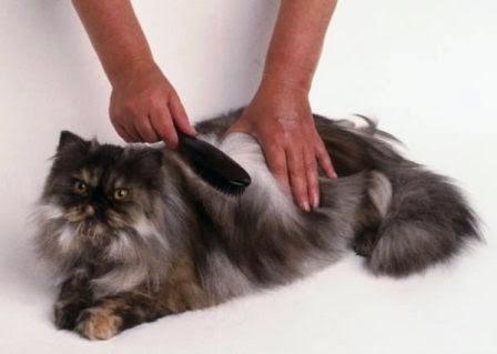 Cepillado diario pelo de las mascotas
