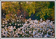 Vuoden Luontokuva 2009